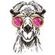 Llama Lenon Vector Illustration