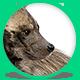 Hyena - GIF Animation Controls for WordPress